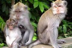 Monkey Forest di Bali