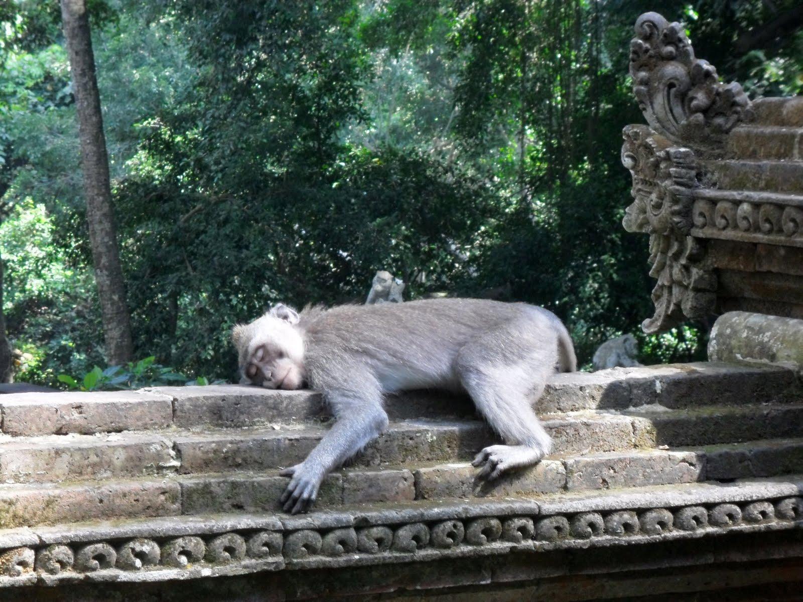 Melihat Lihat Monyet Di Monkey Forest Ubud Paket Wisata Ke