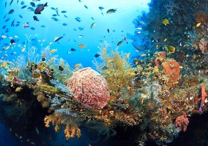 Paket Wisata di Bali 3 Hari 2 Malam : Keliling Bali