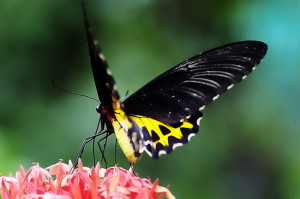 Bali Butterfly Park 12