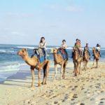 Camel Safari,Edisi Spesial Naik Unta