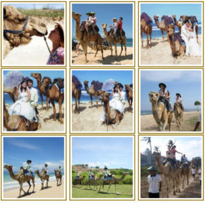 Camel Safari.
